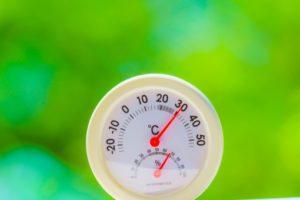 【胡蝶蘭育て方/温度管理】胡蝶蘭を長持ちさせるための温度管理のポイント