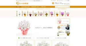 日本胡蝶蘭